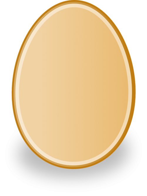 egg poultry chicken