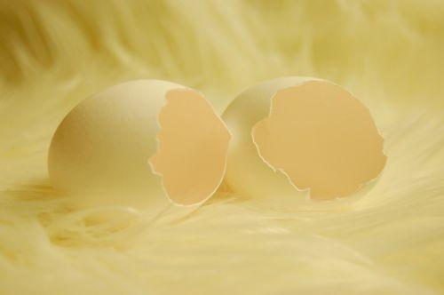 egg eggshell open