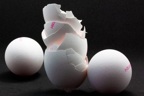 egg  shell  eggshell