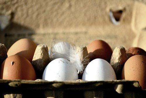 egg  hen's egg  bio