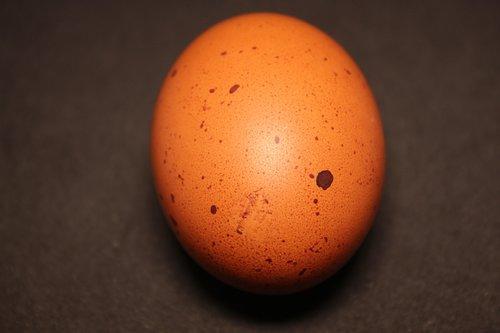 egg  brown  food