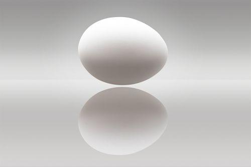 egg hen's egg protein