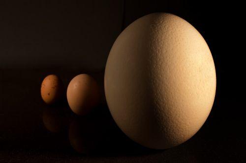 egg macro food
