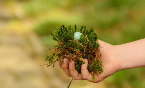 egg nest hand