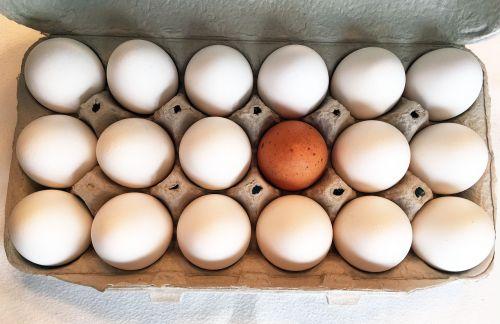 egg carton eggs food