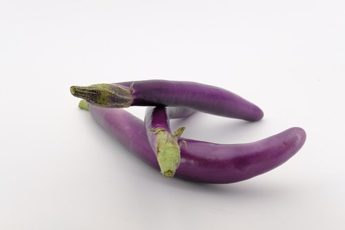 eggplant  melanzana  solanum melongena