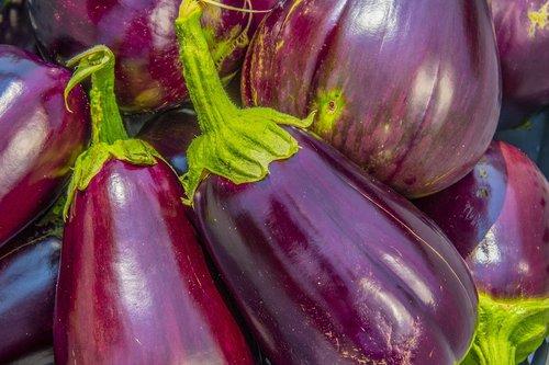 eggplant  aubergine  solanum melongena