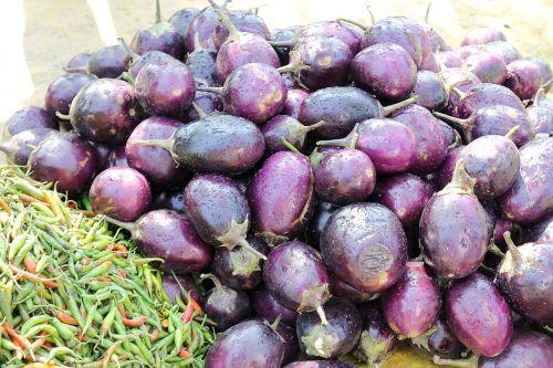 eggplant indian brinjal