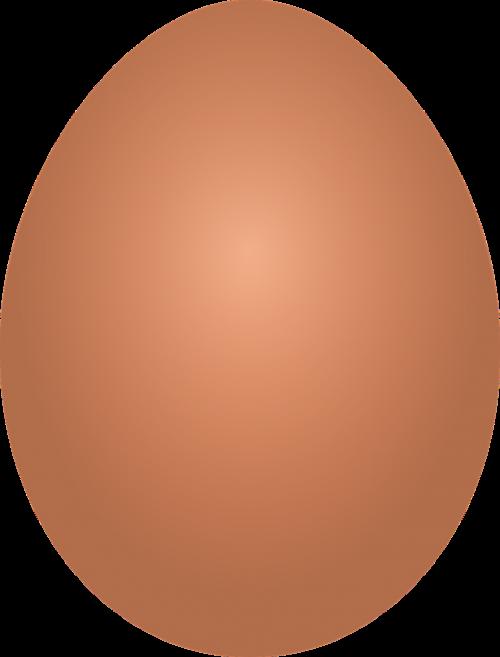 eggs he chicken