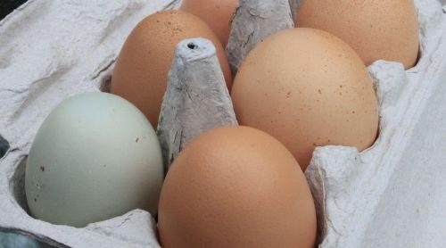 eggs fresh farm