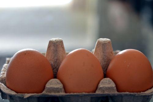 eggs food nutrition