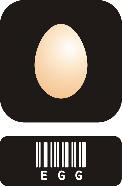 eggs protein choline