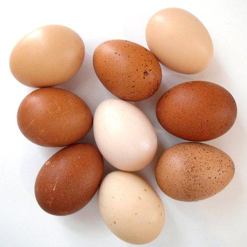 eggs  chicken  brown