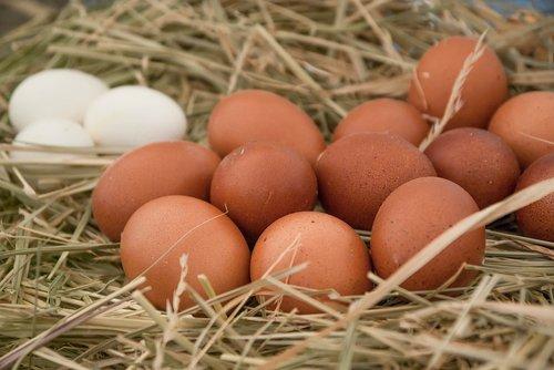 eggs  hen  straw