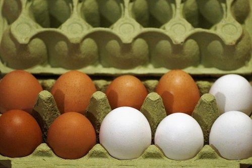 eggs  plato  fresh