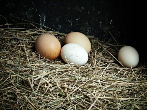 eggs farm delicacy