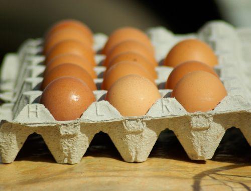 eggs hens kitchen