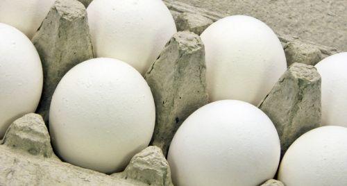 Eggs In Carton #1