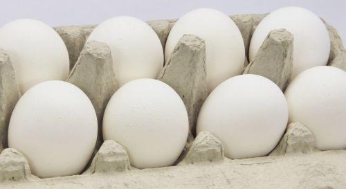 Eggs In Carton #2