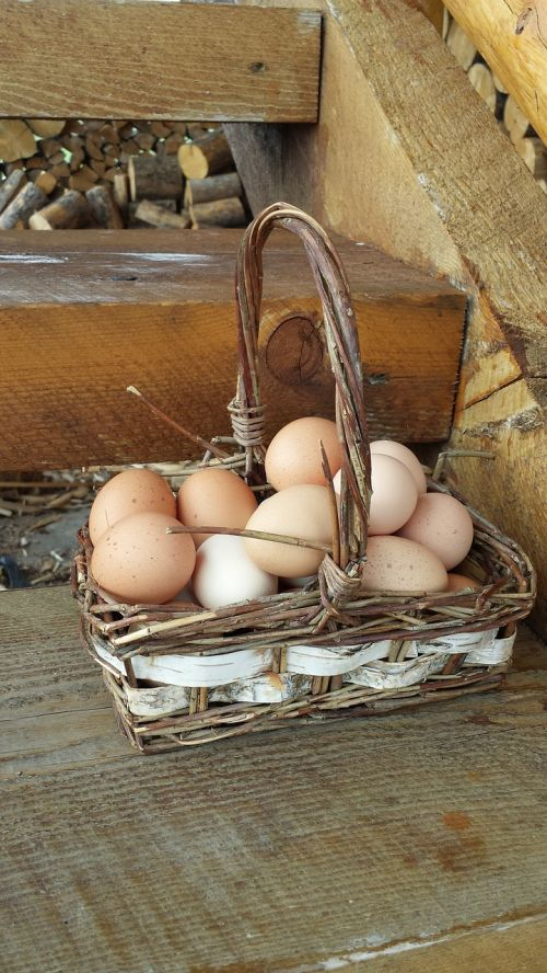 eggs in one basket eggs basket