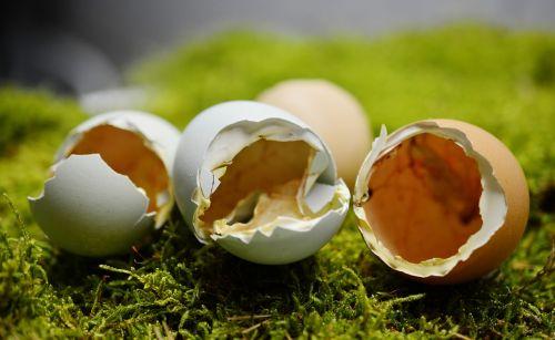 eggshell hatched broken up