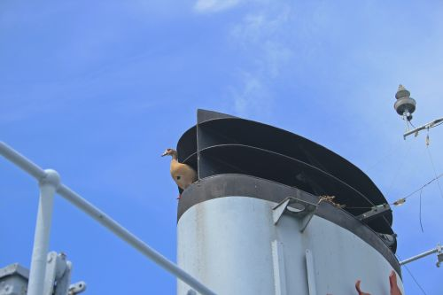 Egyptian Goose On Stack Of Ship