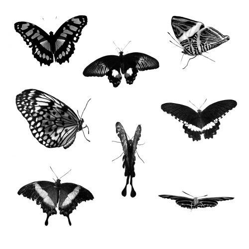 Eight Butterflies