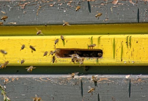 einflugloch bees beehive
