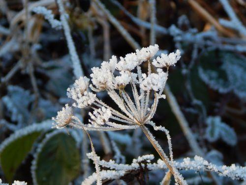 eiskristalle winter cold