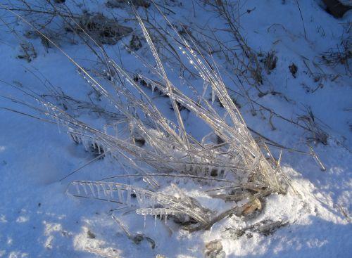 eiskristalle grasses winter