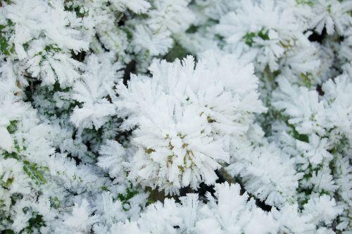 eiskristalle hardest winter