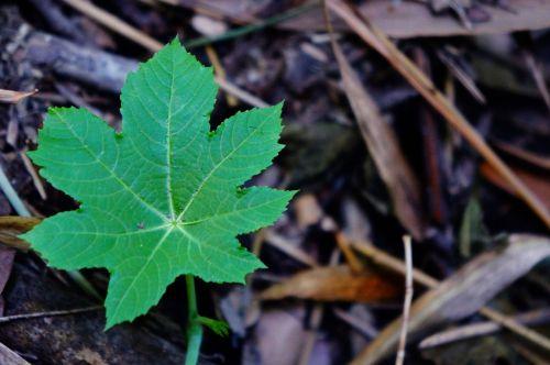el salvador leaves nature