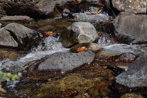 el salvador the impossible water