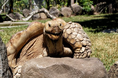 el salvador giant turtles giants
