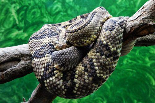 el salvador zoo snake