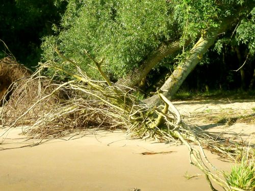 elbe beach walk on the beach tree