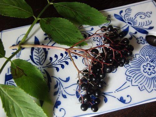 elder berries black elderberry