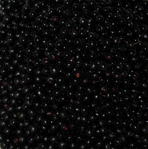 elder holler berries
