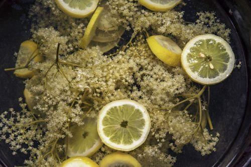 elder sambucus lemon