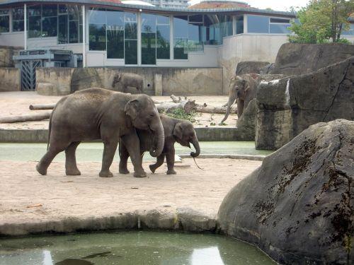 elephant elephant family elephant's child