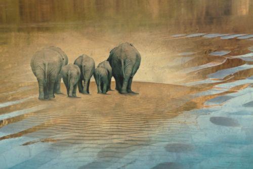 elephant animals herd of elephants