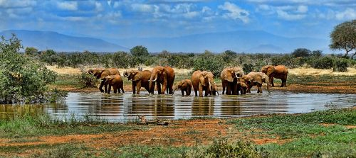 elephant watering hole safari