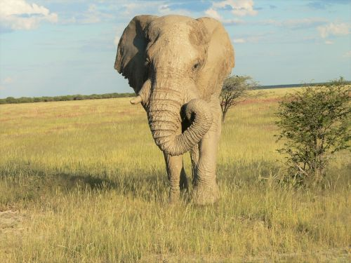 elephant grass landscape mud on skin