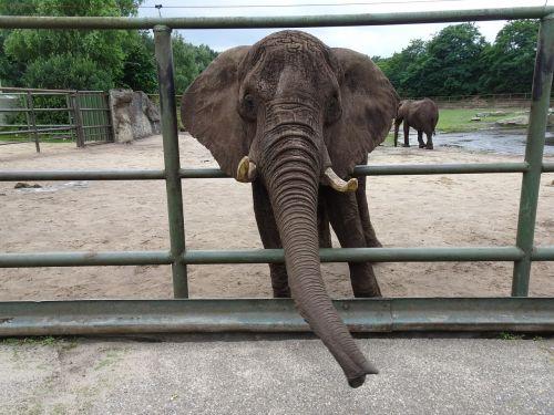 elephant zoo captivity