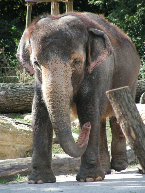 elephant proboscis zoo