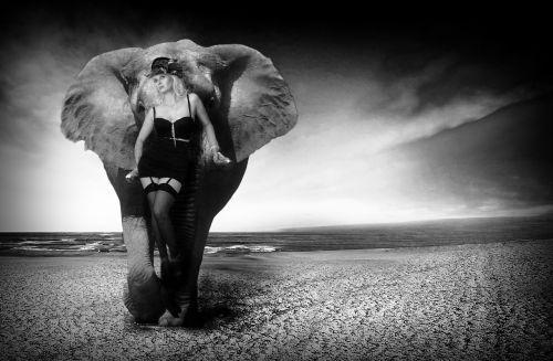 elephant ivory nature