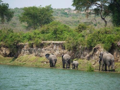 elephant uganda bluff