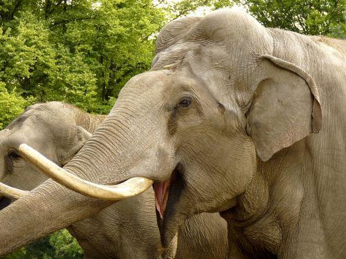 elephant animal zoo
