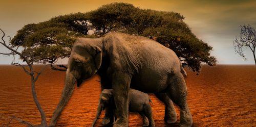 elephant africa baobab