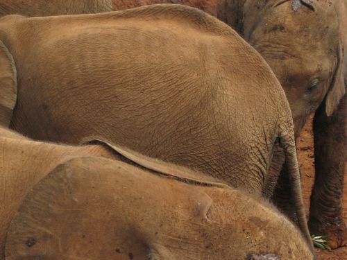 elephant orphan baby